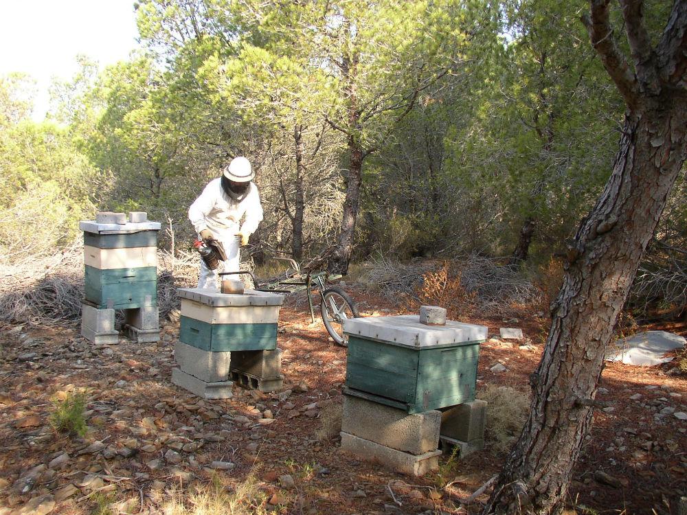 Miels des Pyrénées orientales en seau 2,3,5 kgs