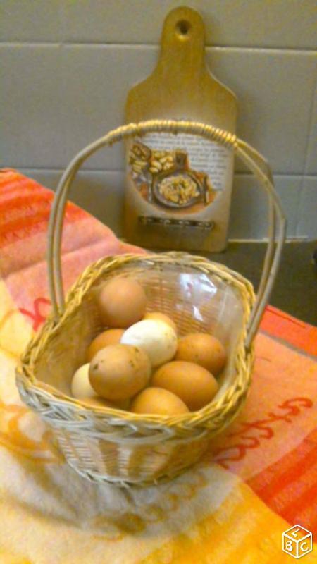 Des œufs Bio