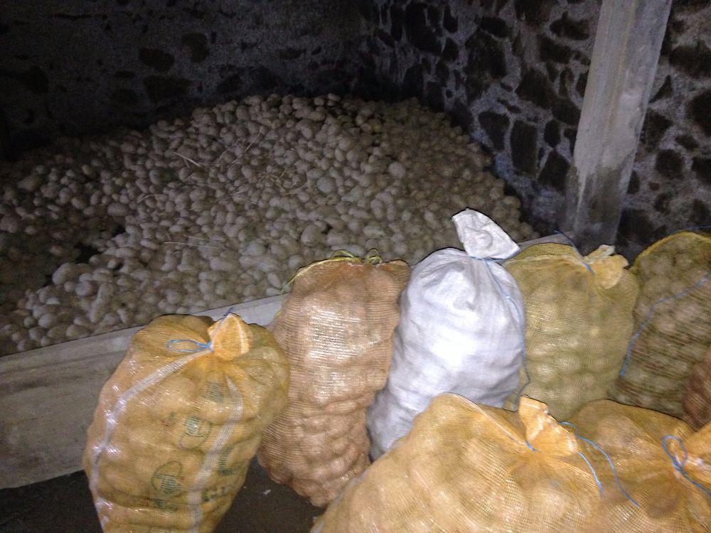 Pommes de terre de consommation 0.60 € / Kg