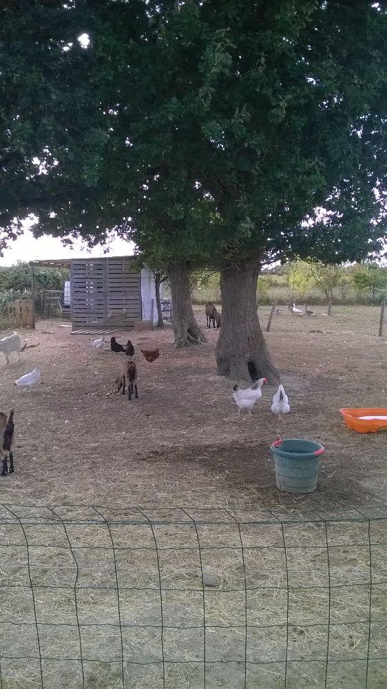 Oeufs de poules élevé en pleine aires