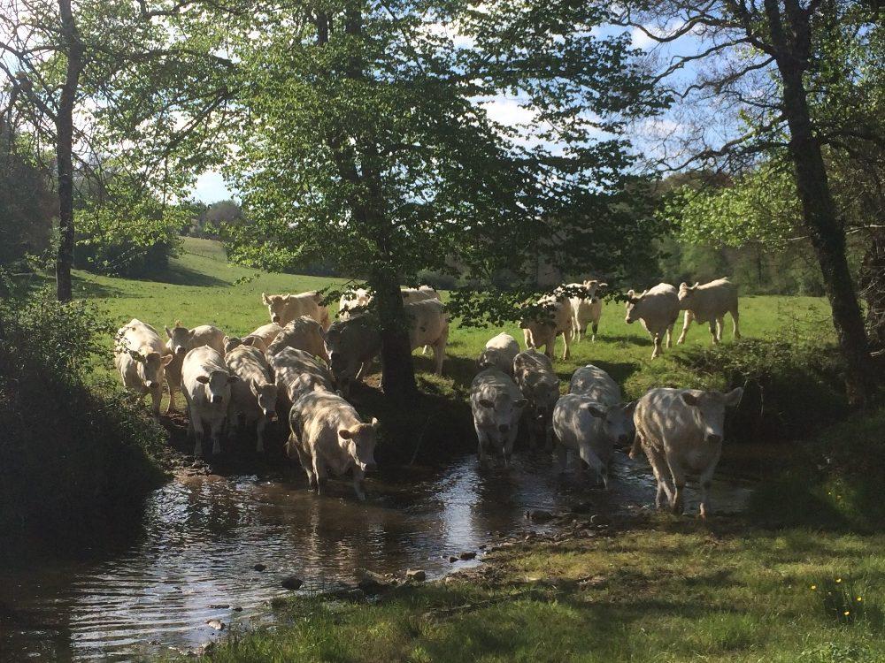 Colis de viande bovine