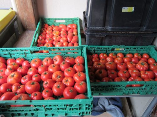 Tomates, poivrons, épinards etc.........