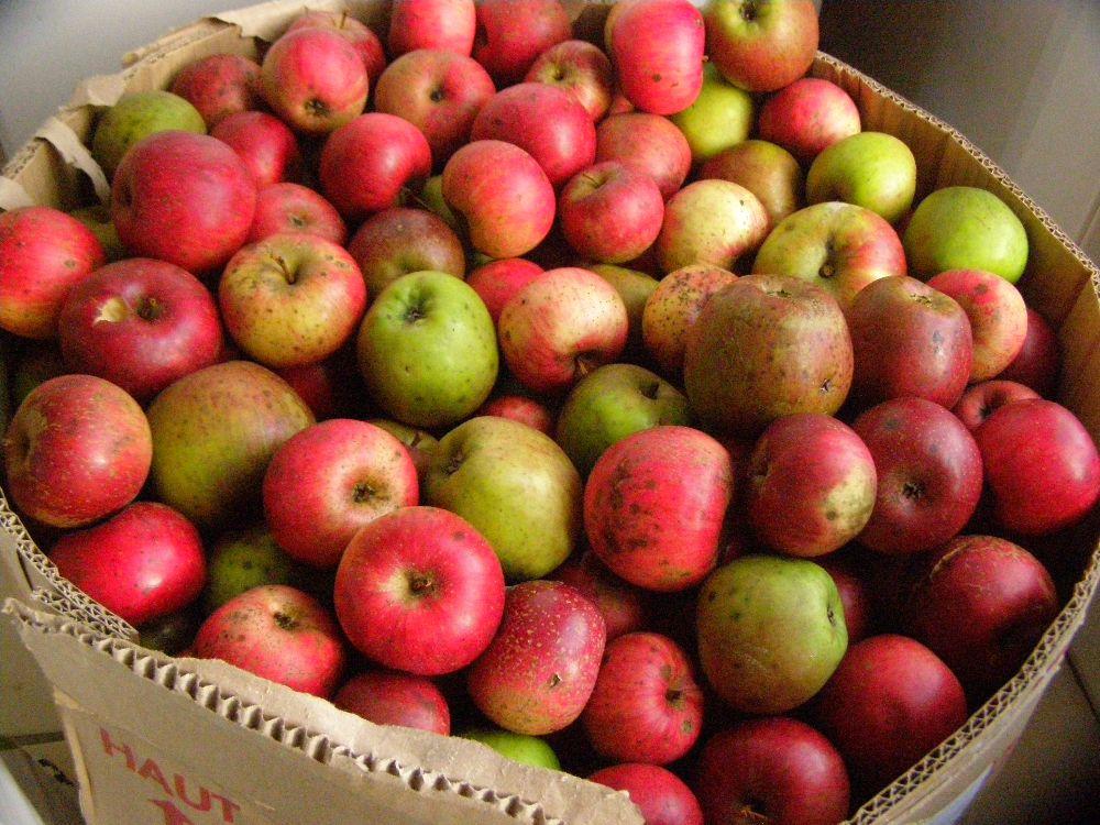 50 kg de pommes bio différentes variétés du verger bio