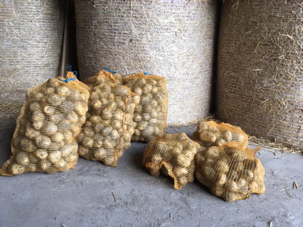 Pommes de terre de la ferme