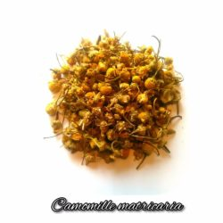 Plantes~aromatiques, infusions, tisanes, cuisine