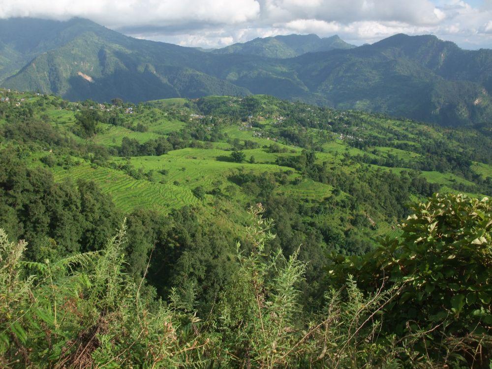 Gingembre en poudre de l'Himalaya 200g- Récolte 04/17-Issu d'un projet solidaire