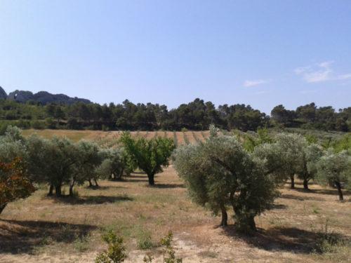 Huile d'olive de Provence ! Grande qualité