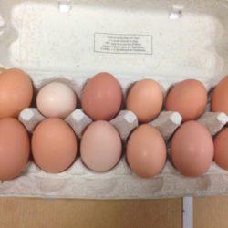 1 douzaine DE BEAUX OEUFS de poules