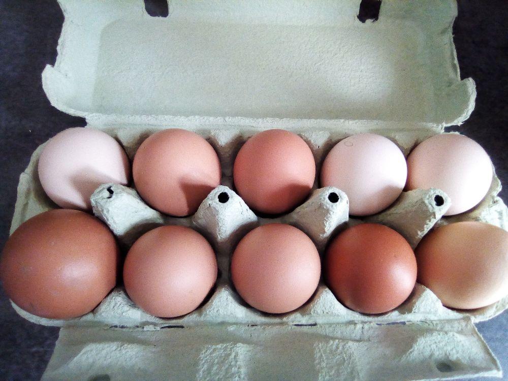 Oeufs de poules heureuses
