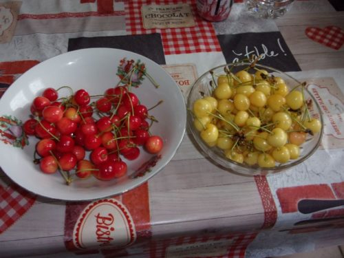 Cerise rouges ou jaunes bio