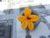 Fleures de courgettes