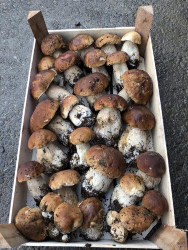 Cèpes et girolles frais gros quantité