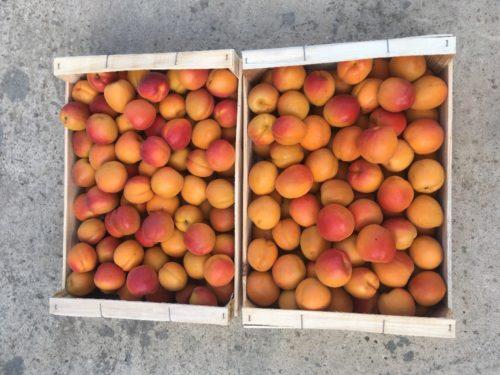 Abricots non traités