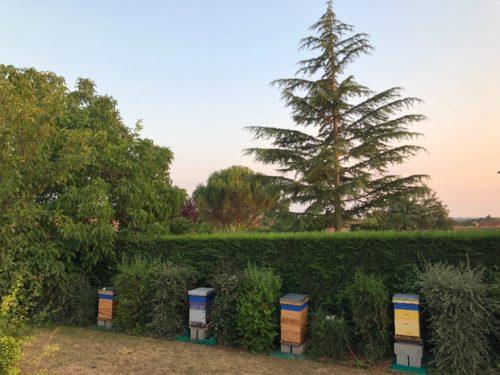 Miel toutes fleurs