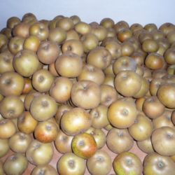 Pommes Grise Du Canada