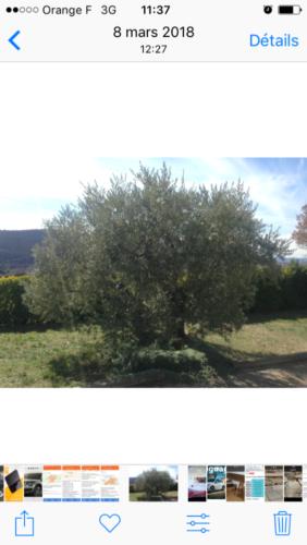 Huile d'olive non traitée