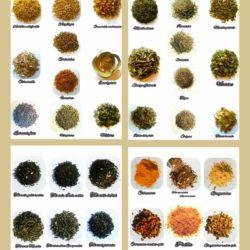 Aromatiques cuisine et infusion